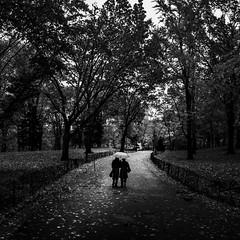 Central Park Rain (Mabry Campbell) Tags: 2012 houstonphotographer mabrycampbell manhattan ny nyc newyork newyorkcity newyorkcounty november us usa unitedstates unitedstatesofamerica blackandwhite centralpark dark fall fineartphotographer fineartphotography image monochrome moody park path people photo photograph photographer photography squarecrop trees umbrella walking f50 may 2014 may262014 20140526h6a6043 24mm 300sec 100 tse24mmf35l