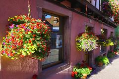 Flower power in Alsace (Marco Braun) Tags: ribeauvillé alsaceelsass francefrankreich