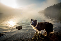 38/52 Morning Bath (JJFET) Tags: 38 52 weeks for dogs mist border collie