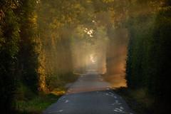 ochtend mist (Omroep Zeeland) Tags: opkomende zon mist vlissingen natuur zeeland walcheren oostsouburg