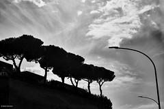 Rom  Vatican 1  b&w (rainerneumann831) Tags: blackwhite bume linien rom silhouette strasenlaterne vatican