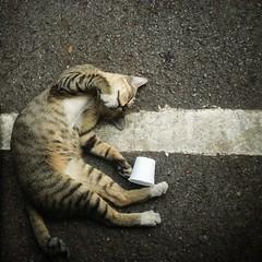 passed out (moksimil) Tags: travel white drunk cat square thailand bangkok sleepy katze passedout iphone chatuchak quadrat quadratisch iphoneography moksimil iphone4s snapseed