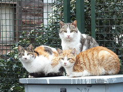The lords of the Dustbin (CyberMacs) Tags: cute nature animal cat turkey mammal crazy trkiye places istanbul kedi constantinoble othernames jelzok