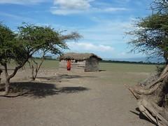 201301081620 - TZ.NGR - Village Maasa (47) (Stevenvision) Tags: de tanzania kenya masai dinka masaai afrique soudan lest tanzanie nuer guerriers btail nilotic seminomadic leveurs maasa nilosaharan seminomades nilotiques