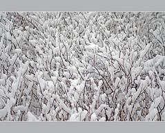 Winter detail (aka malec) Tags: trees winter sky white mountain snow cold tree ice grass fog clouds forest petals frost loneliness sam box joy poland polska dry petal willow same zima spruce nieg ld mrz trawa drzewo chmury niebo sucha rado biay samotno wierk zimno patki patek