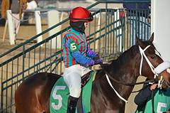 2013-02-09 (187) Natasha Coddington on #5 Go Money Go (JLeeFleenor) Tags: girls woman caballo cheval donna femme mulher cal jockey frau jinete cavallo cavalo pferd equestrian vrouw equine hest dona thoroughbreds hevonen paard cavall kon laurelpark hast jokey wanita fantino    jquei hestur kvinne   nainen kobieta perd femaleathletes   kvinde ena  kvinna kadn n lamujer  dokej   femalejockey rennreiter  marylandhorseracing  marylandracing   okej kilparatsastaja jocheu     ngihorses
