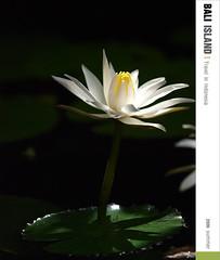 D3_蓮花_002 (Ache_Hsieh) Tags: travel flowers summer bali digital indonesia island olympus e3 swd 巴里島 蓮花 zd 蜜月 印尼 1454mm2835 50200mm2835
