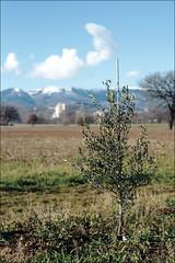 olio d'oliva (2) (andaradagio) Tags: italy canon italia canonef50mmf18 spoleto umbria oliodoliva andaradagio nadiadagaro sangiacomodispoleto