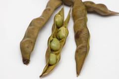 12 - February - 2013: Beans (Ash if) Tags: macro beans pod sony vegetable bolton greenbeans february runnerbeans a77 cosina100mm 2013 indiansbeans