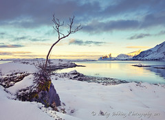 distant light (pixellesley) Tags: winter sunset sunlight snow mountains cold tree water norway clouds reflections landscape moss rocks fjord icy earlyevening barebranches rockpaper lofoton magicunicornverybest magicunicornmasterpiece rockpaperexcellence torveya