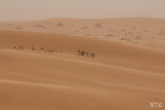 جو غير 1 (Eissa Al-Shamari عيسى الشمري) Tags: غروب الطبيعة طبيعة شروق عيسى طعس الشمري حايل نفود حائل النفود لاندسكيب