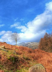 A walk on the fells (GillWilson) Tags: