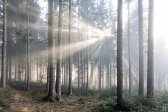 when the fog lifted (gregor H) Tags: autumn light fall nature fog forest landscape cool mood quiet space room foggy naturereserve passion mysterious idyllic brightness atmospheric sunbeams dreamscape spiritoflife fogg blindinglight freshmorning