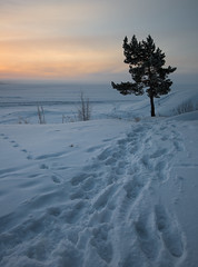 Winter trail (- David Olsson -) Tags: morning winter lake snow cold tree nature clouds sunrise landscape dawn early nikon cloudy sweden path footprints calm trail karlstad fir footsteps february fx 54 vnern lonelytree d800 vrmland 1635 orangeglow 1635mm skutberget 2013 lonesometree emprty davidolsson 1635vr almostovercast