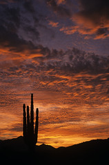 Silhouetted saguaro cactus sunset at dusk with dramatic clouds (Jim Corwin's PhotoStream) Tags: travel vacation usa plant southwest tourism nature beautiful beauty vertical cacti landscape outdoors photography desert sightseeing scenic peaceful nobody landmark icon tourists illuminated stunning pacificnorthwest northamerica backlit awe inspire barren iconic arid tranquil landforms naturalworld mothernature inspiring attraction bushland americansouthwest locallandmark beautyinnature extremeterrain localattractions southwestunitedstates cereusgiganteus famouslocation