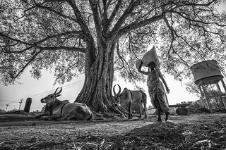 In the shadows of Kilambi
