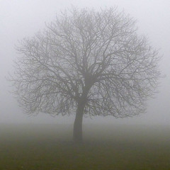 misty tree (pho-Tony) Tags: square gravesparktree 365square