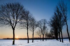 tree-lined road (hjuengst) Tags: schnee winter sunset snow avenue bume hdr harthausen mhlweg mschenfeld nikond7000hdr mschenfelderallee