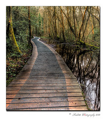 Boardwalk (Fred255 Photography) Tags: uk england nature water landscape landscapes walk hampshire swamp fred l fleet ef gp waterscapes eos1ds fleetpond llens greatphotographers topshots ef1740mmf4lusm ef1740mm frameit 1dsmk3 photosandcalendar canoneos1dsmarkiii worldwidelandscapes panoramafotogrfico theoriginalgoldseal mygearandme mygearandmepremium fred255 greaterphotographers frameitlevel3 frameitlevel2