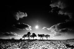 Dorme il silenzio di un Sonno greve (bebo82) Tags: trees blackandwhite bw sun snow grass alberi clouds nuvole pentax erba neve sole prato biancoenero deandrè pentaxk20d pentaxk20 rakitovec