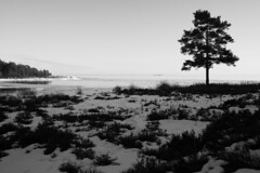 Shaded foreground (- David Olsson -) Tags: winter blackandwhite bw lake snow tree ice nature monochrome landscape mono march frozen nikon sweden outdoor handheld grayscale fx vnern clearsky lonelytree d800 hammar vrmland 1635 sidelit 1635mm 2013 lonesometree flickroid takene davidolsson hammarsydspets 1635vr