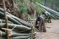 Mission Workshop _ PiNP Bike Tour: Day 06 (John Watson / The Radavist) Tags: china forest farmers bamboo moganshan bambooforest
