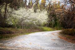 Country Road in Spring (Sierra Springs Photography) Tags: pleasantvalley outingdale engagementlocations