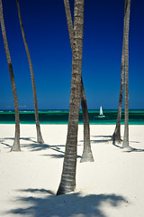 Punta Cana, Dominican Republic, 2013 (marc_guitard) Tags: ocean travel trees sea