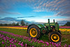Deere John (Gary Randall) Tags: flowers tractor oregon sunrise tulips farm johndeere woodburn woodenshoetulipfarm willamettevalley dsc88772