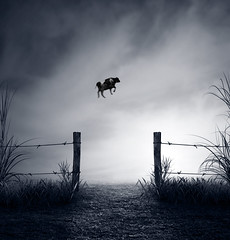 Fly (batabidd) Tags: bw blancoynegro field night photomanipulation photoshop cow artistic digitalart creative floating textures digitalpainting photomontage textured vaca flotando digitalpaintingdreamysurrealimaginarybatabiddluismiranda
