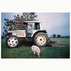 (Kerb 汪) Tags: dog taipei kerb paopao 2012 konicac35 konicac35ef f1010004 konicacenturiadnp200 kerbwang konicac35film036 印象10112716