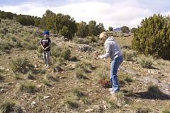 Horses&shooting 025 (R140232) Tags: horses gun fork shooting colts bb ceder
