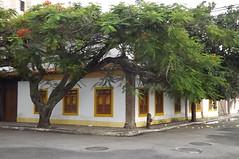 Certa rua de Cabo Frio .... (Magaly Mendona) Tags: casa janela rua antiga rvore cabofrio