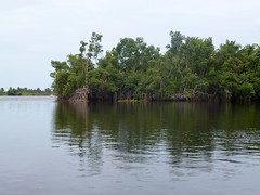Mangrove Island - Cte d'Ivoire (UNEP Disasters & Conflicts) Tags: environment climatechange ctedivoire unep environmentalassessment unitednationsenvironmentprogramme unepmission uneppostconflictenvironmentalassessment environmentalexperts hotil
