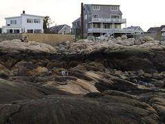 2016.06.19-19.53.50 (Pak T) Tags: beach bennett dog minotbeach newengland olympusmzuiko25mmf18 pug rocks scituate shore