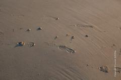 Beach-20160817-50449.jpg (Lucien Schilling) Tags: cadzandbad beach cadzand zeeland netherlands nl