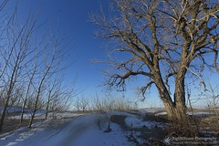 Cooling Effect (right2roam) Tags: nebraska winter snow snowy cold blue tree plains prairie rural missouririver valley right2roam