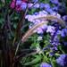 The beautiful gardens on Mainau