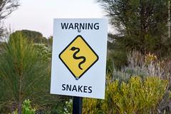 The Great Ocean Road, Australia. (RViana) Tags: australien australie oceania ozeanien ocanie oseania oceanien  grandeestradaocenica granderodoviaocenica pacifiocean oceanopacfico snake cobra