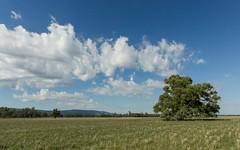 Springview - 129 Loch Lomond Road, Gooloogong NSW