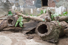 mongoose (embem30) Tags: potterparkzoo lansing mongoose