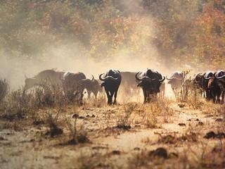 Namibia Dangerous Game Safari - Caprivi Strip 85