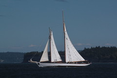 IMG_2215 - Port Townsend WA - Port Hudson Marina - 2016 40th Annual Wooden Boat Festival - schooner ZODIAC (BlackShoe1) Tags: washington wa washingtonstate olympicpeninsula porttownsendwa boat boatfestival woodenboat classicwoodenboat woodboat northwest maritime center wooden foundation wbf nwmc port hudson wash pacificnorthwest pugetsound jeffersoncounty eastjeffersoncounty quimperpeninsula porttownsend victorianseaport schooner zodiac