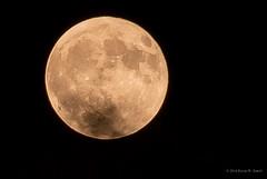 Harvest Moon (Back Road Photography (Kevin W. Jerrell)) Tags: nikond60 nightphotography backyardphotography nightshots fullmoon moon light summer