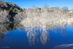 Teñido de blanco (Pepe Palao) Tags: españa paisajes naturaleza fotos ríos imágenes setas albacete lagunas castillalamancha letur charcas ríosegura jopachi pepepalao