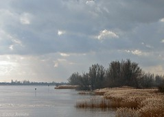 Rietkragen ( Annieta  Off / On) Tags: holland reed nature water netherlands clouds canon river riviere nederland natuur wolken powershot s2is polder highwater zon riet allrightsreserved lek tegenlicht februari rivier krimpenerwaard coth bewolking hoogwater supershot 2013 annieta goldstaraward coth5 usingthisphotowithoutpermissionisillegal mygearandme