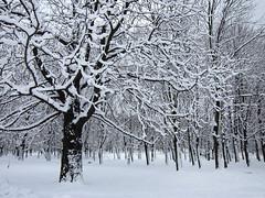 (ela_s) Tags: park kraków zima canons90