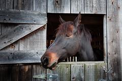 Horse Barn [EXPLORED]