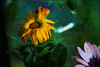 Floral (desde mi corazón) Tags: photomix flickrdiamond tatot magicunicornverybest magicunicornmasterpiece bestevercompetitiongroup bestevergoldenartists creativephotocafe besteverdigitalphotography
