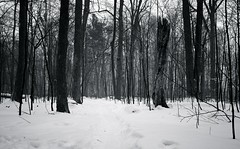 a shooters dream - the snow continues to fall (edewar photography) Tags: world school summer white snow black texture sorry beauty lines yellow vertical horizontal thanks composition america dark lens island photography rebel tim amazing nikon eric stream flickr king sad looking shot angle bright unique background great wide perspective dream places super holy photograph trinity doughnut taylor teenager trick 300 capture malik discovery those thunder shooters amazed talented linear facebook discover wno amzing dewar 105mm 30000 kingstone nikond thous linera d80 flickrdiamond tumblr removedfromstrobistpool thakns 00030000thirtythousandamazingthanksnikond80d700070300703001820018200102410to24